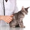 Ветеринарные клиники в Угличе